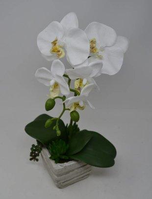 Potted White Phalaenopsis Succulent Arrangement