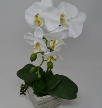 Potted White Phalaenopsis Succulent Arrangement