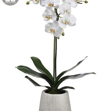 "30"" Phalaenopsis Orchid in Marbled Pot"