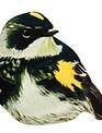 Realistic Bird Screen Door Saver (6 Styles)