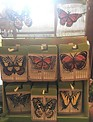 Radiant Butterfly Screen Door Saver (6 Styles)
