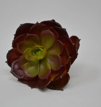 Burgundy Cabbage Echeveria Pick
