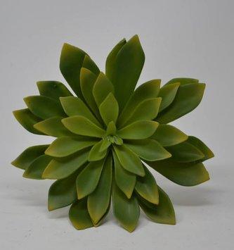 XL Green Prince Echeveria Pick