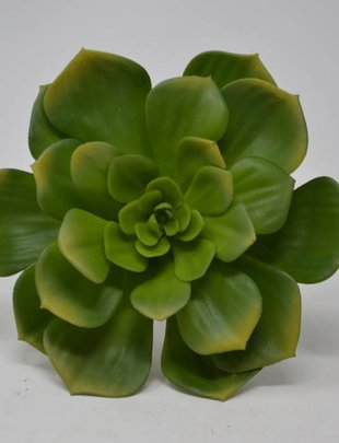 XL Green Pointed Echeveria Pick