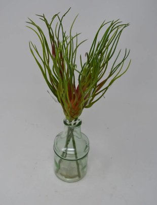 Tillandsia Grass Bud Pick