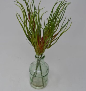 Tillandsia Grass Bud Pick