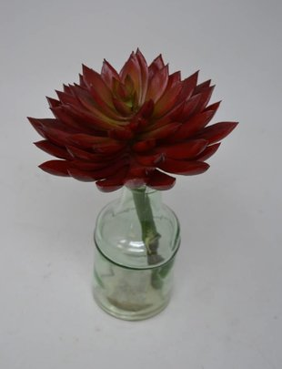 "5"" Sword Tip Echeveria Pick (2 Colors)"