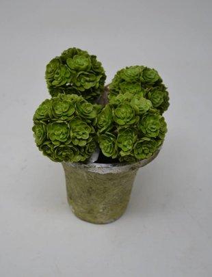 "2"" Mini Green Echeveria Orb"