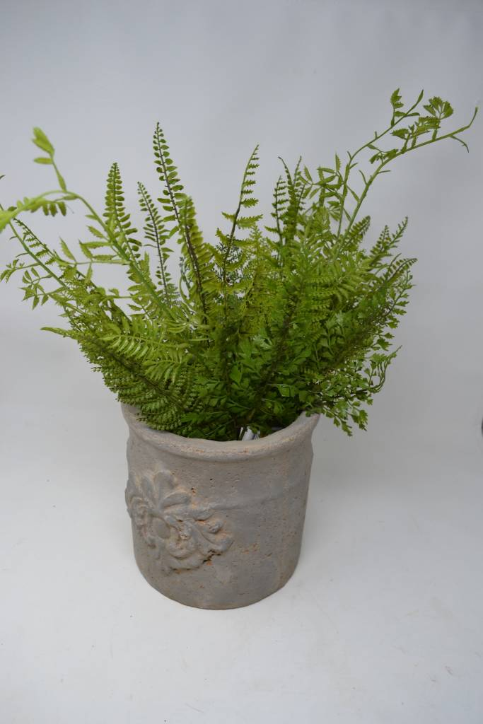 Mixed Fern Spray