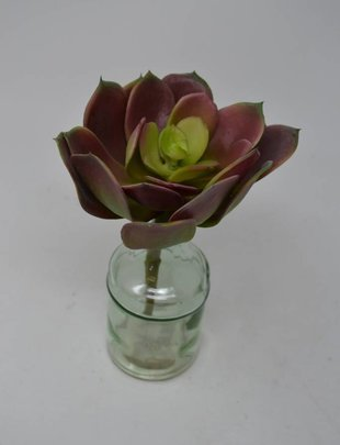 Mauve Green Echeveria Pick