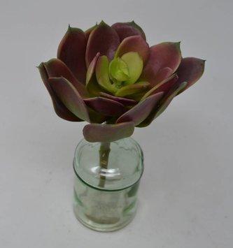 Mauve Green Echeveria Pick