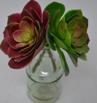 Echeveria Stem (2 Colors)