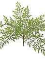 "15"" Nandina Leaf Bush"