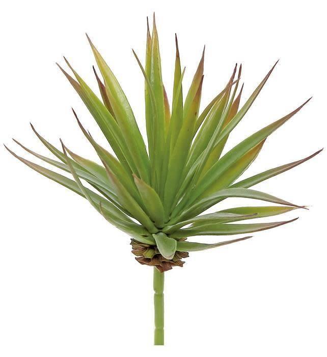 Green Marginata Succulent Pick