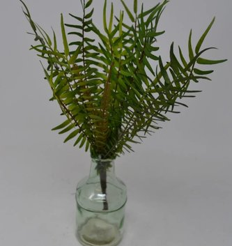 "13"" Finger Fern Bush"