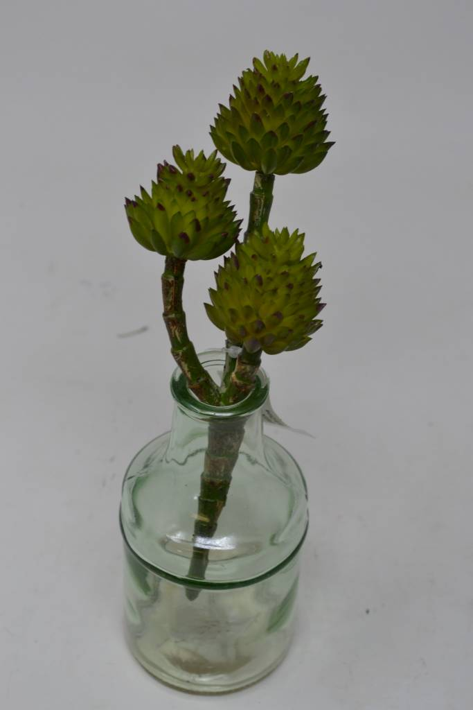Spiny Protea Succulent Pick