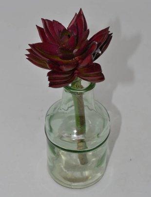 Burgundy Sharp Leaf Succulent Stem