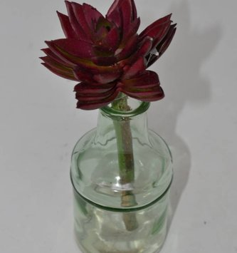 Burgundy Sharp Leaf Succulent Stem
