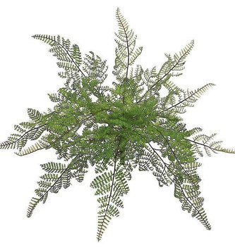 Medium Lace Fern Bush