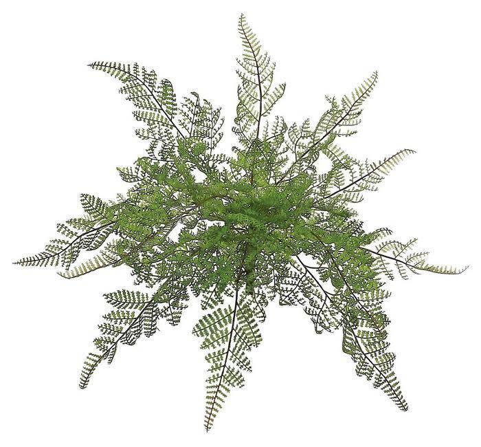 Medium Lace Fern Bush