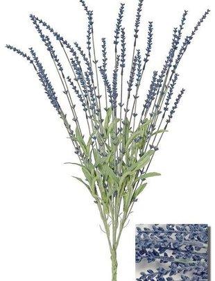 Dark Blue Lavender Bush