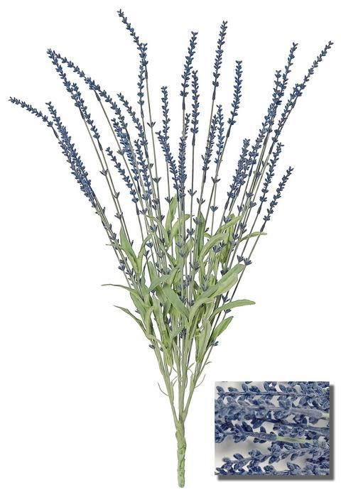 Dark Blue Lavender Bush