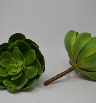 Giant Sage Echeveria Pick