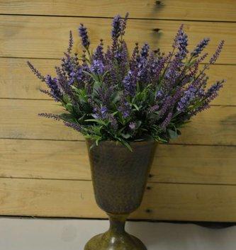Mixed Lavender Bush