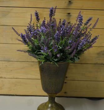 Mixed Lavender Bush