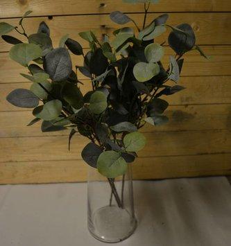 Silver Dollar Eucalyptus Stem