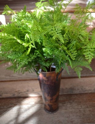 Leather Fern Spray