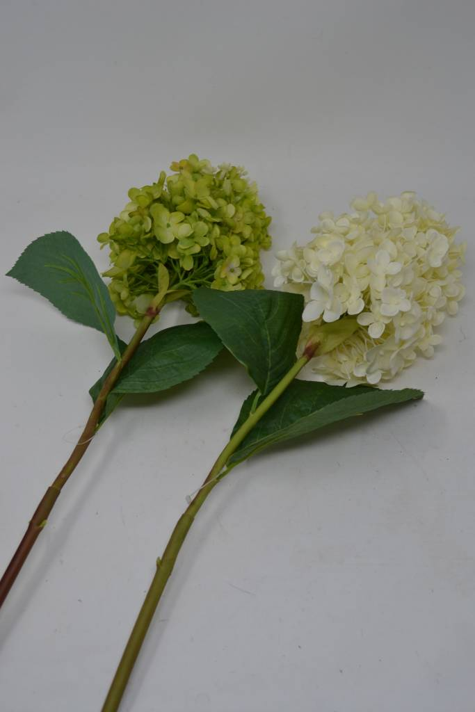 Fresh Cone Hydrangea Stem
