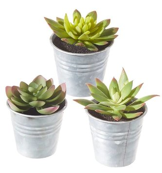 Mini Potted Succulent (3 Styles)