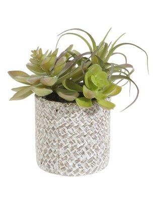 Basket Weave Potted Succulents