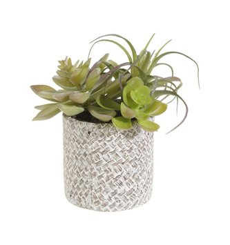 Basket Weave Potted Succulents