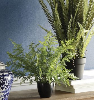 """14"""" Potted Wild Leather Fern"""