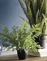 "14"" Potted Wild Leather Fern"