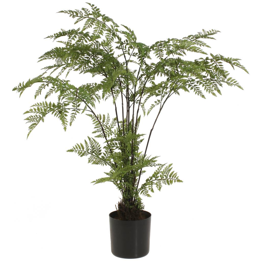 "25"" Potted Wild Leather Fern"