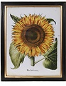 "24"" Sunflower Botanical Print (2 Styles)"