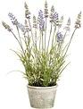 "15.5"" Garden Lavender in Pot"