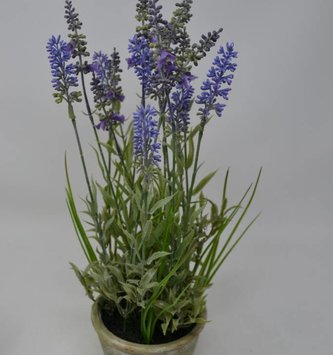 "15.5"" Garden Lavender in Pot"