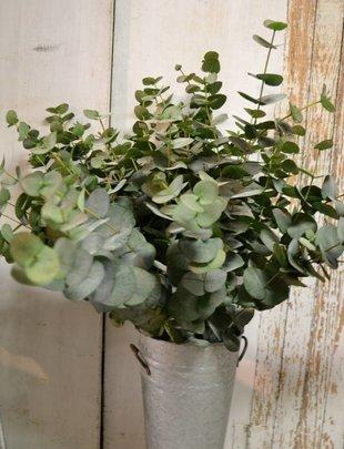 Large Eucalyptus Spray
