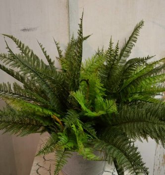 "13"" Mountain Fern Bush"