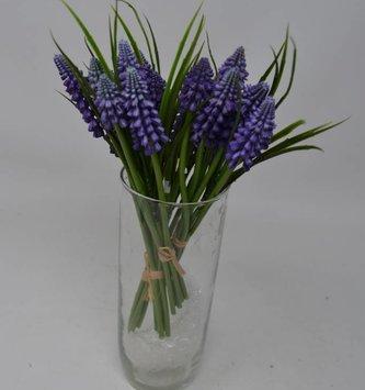 Purple Muscari Bundle