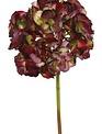 Large Hydrangea Bloom