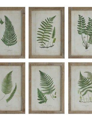 Wood Framed Botanical Fern Print