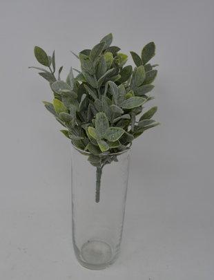 """10"""" Dusty Leaf Bush"""