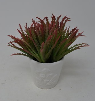 Red Green Mini Aloe Vera Pick