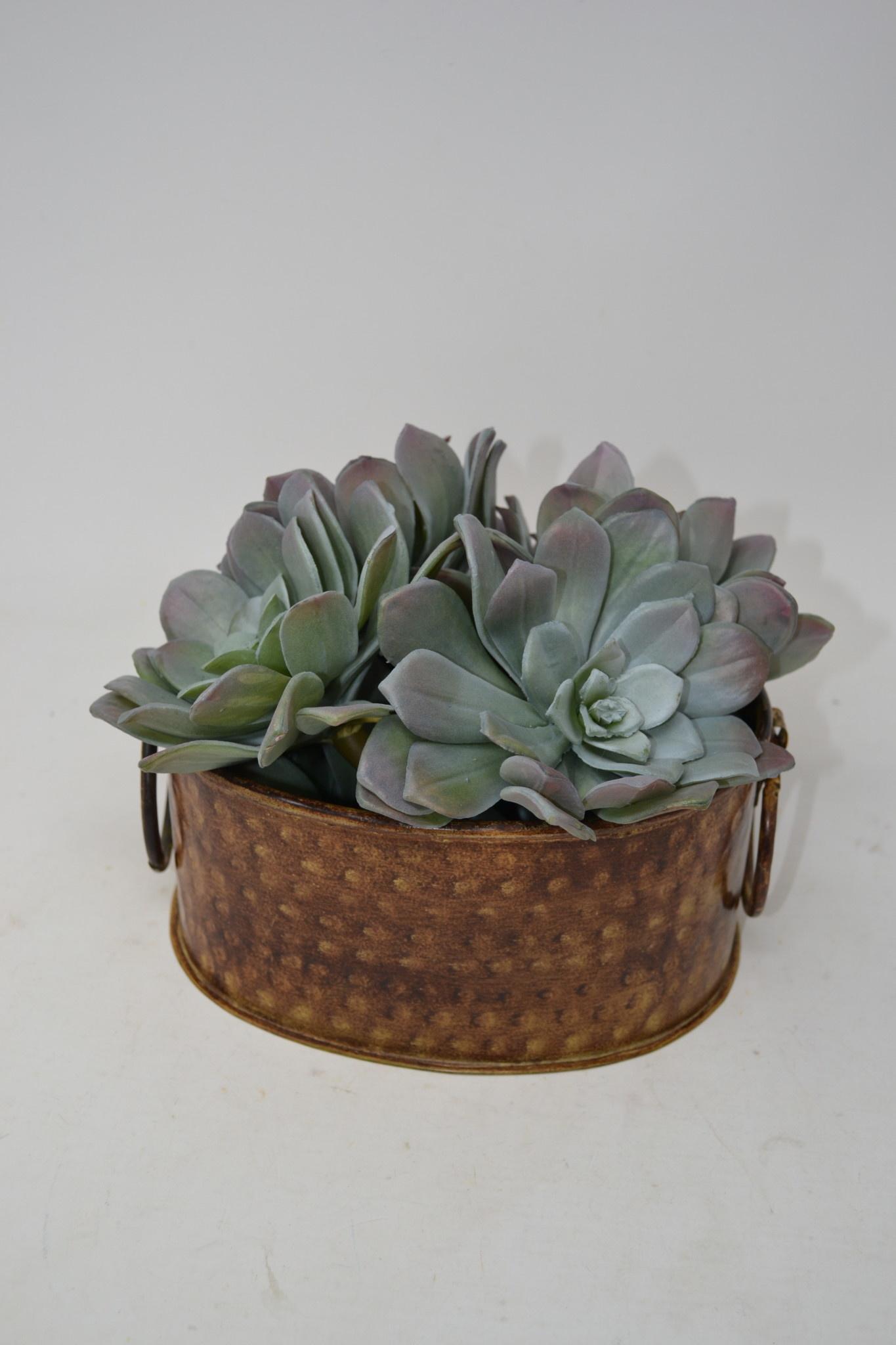 Sage Purple Rosette Succulent