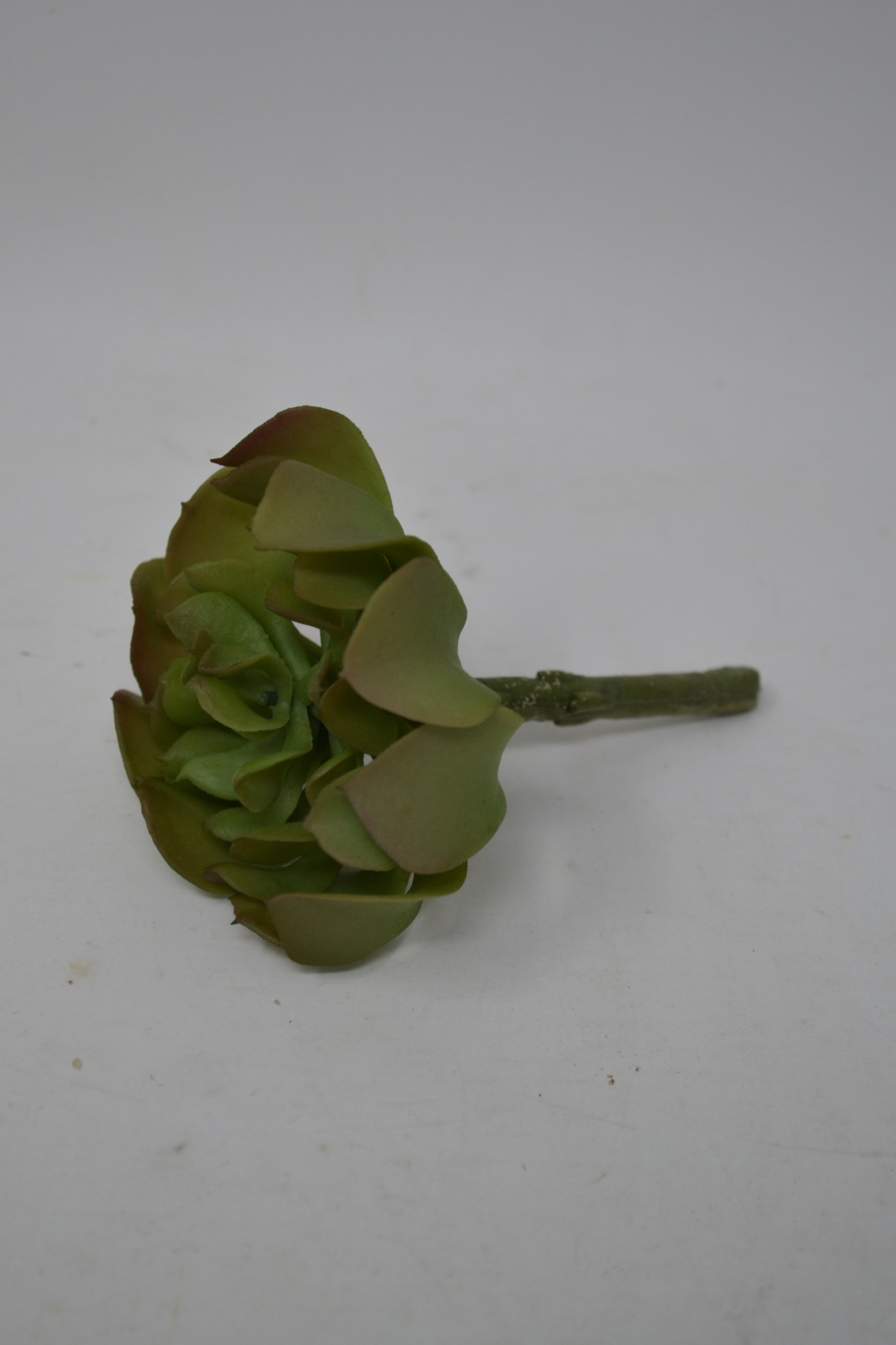 Green Alocasia Succulent Pick